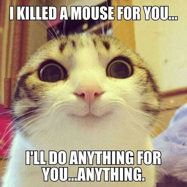 I Killed A Mouse For You Cat Meme
