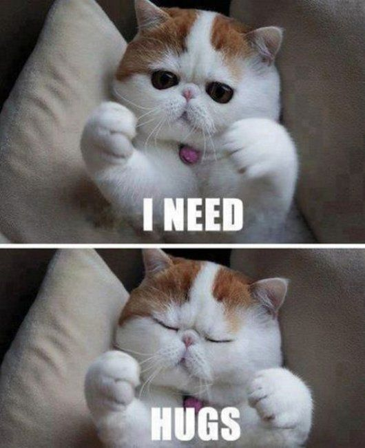 Adorable Funny Cat Picture 530x651