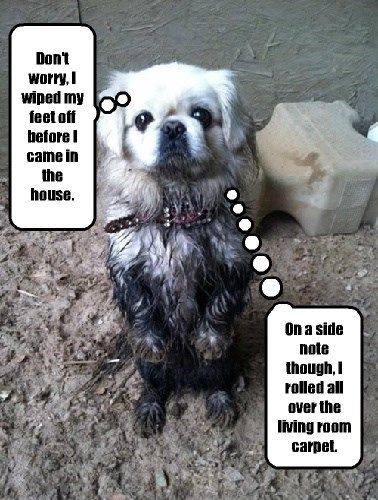dogs whoops muddy dirty