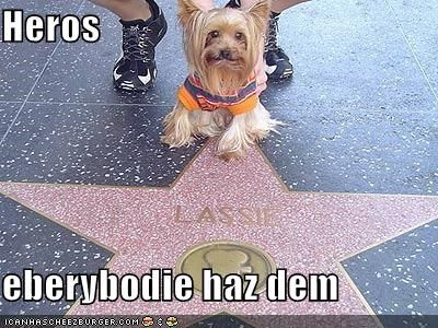 happy dog hero hollywood hollywood star Hollywood Walk of Fame lassie silky terrier smiles