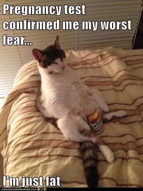 animals cat fear fat just pregnancy test caption worst confirmed