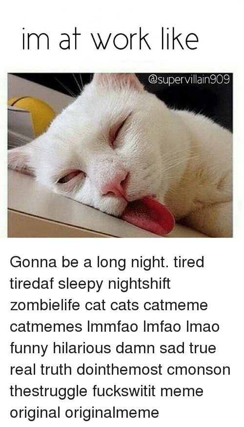 Cats Funny and Lmao im at work like Gesupervillain909 Gonna be a long
