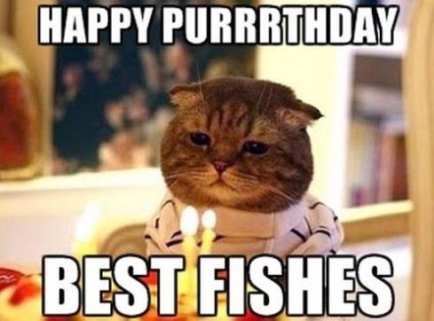 Happy Birthday Cat Meme