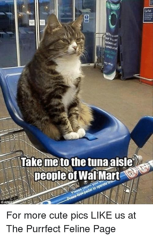 Cute Memes and Wal Mart Why ones ade Take me to the tuna