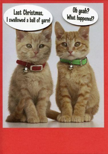 2 Kittens Funny Humorous Cat Christmas Card