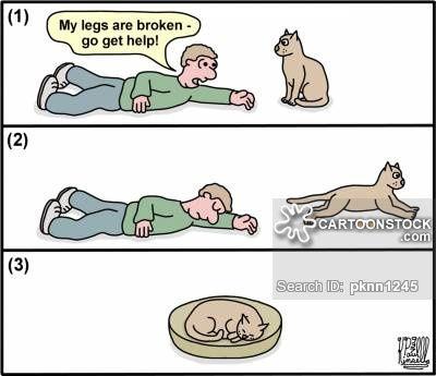 Cat Bed cartoons Cat Bed cartoon funny Cat Bed picture Cat Bed