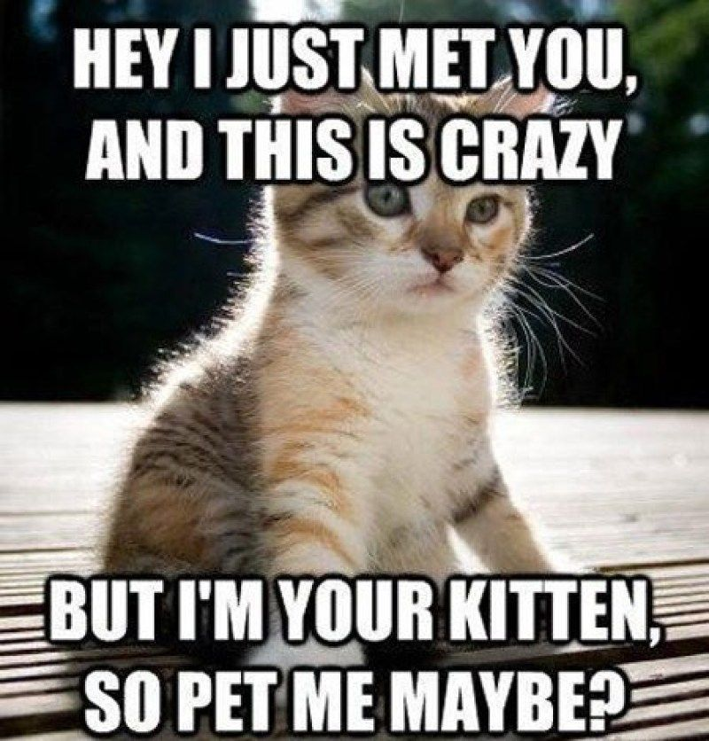 funny cat memes that will make you