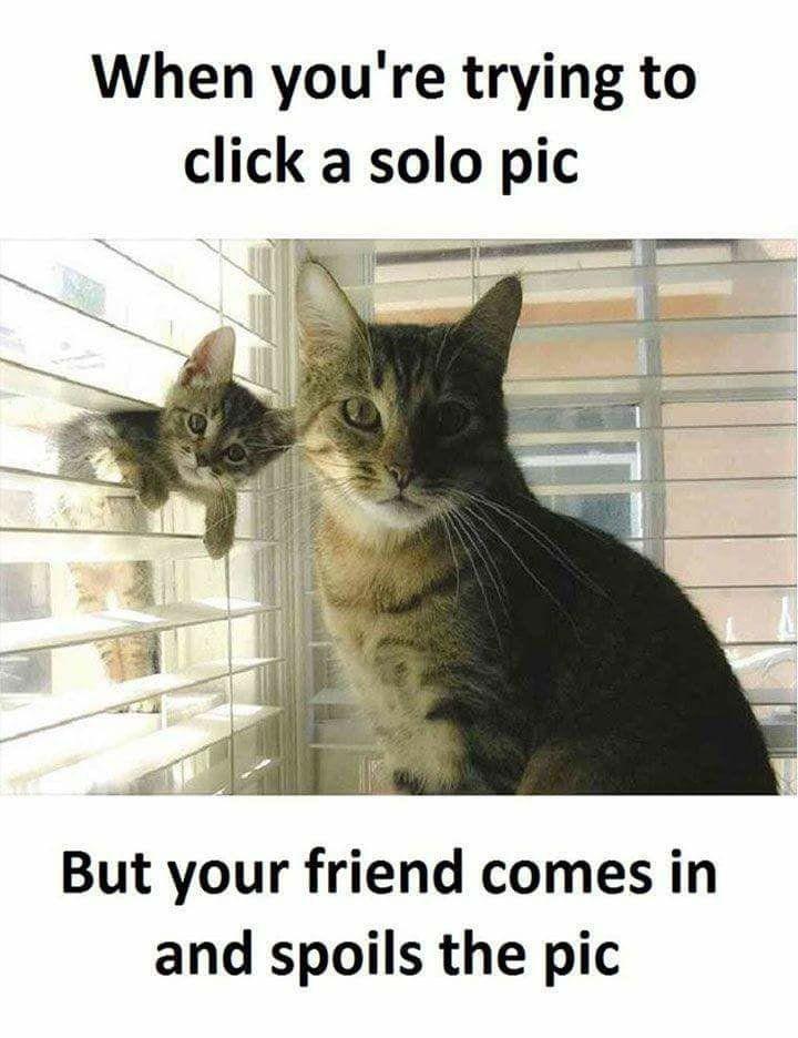 Grasp the Beautiful Funny Cat Selfie Memes