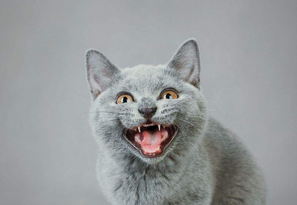 """Epic Reddit Prank """"Cat Facts"""" Is Now An App That Lets You Text Troll Your Friends"""