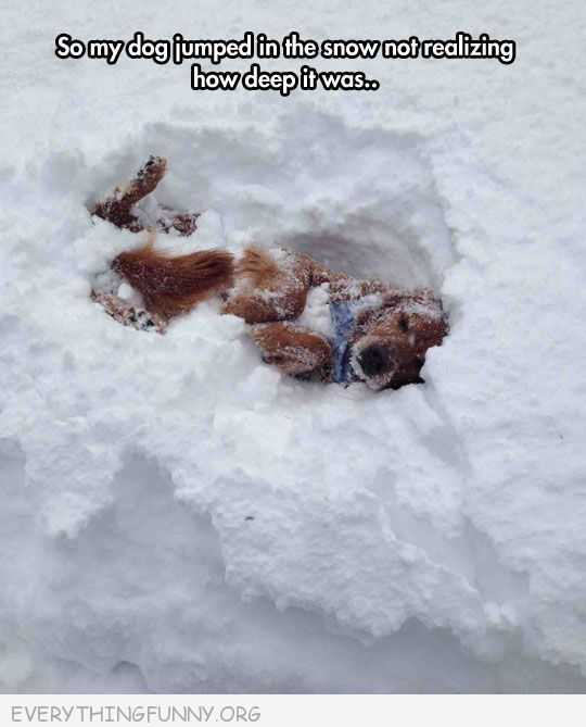 Dog jumped in the snow