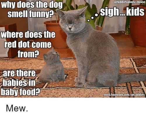 Cats Doe and Dogs Why does the dog smell funny Where does