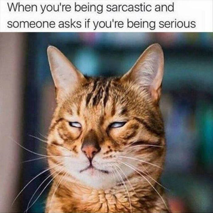 Grasp the Beautiful Funny Sarcastic Cat Memes