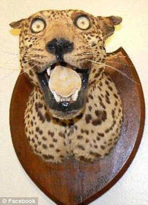 A leopard is fashioned onto a plaque taken from the the page badly stuffed