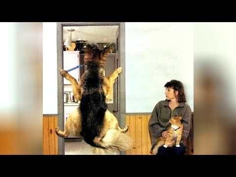 animals pets vet
