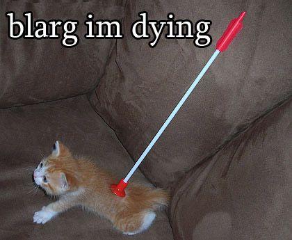 """funny cats captions """""""