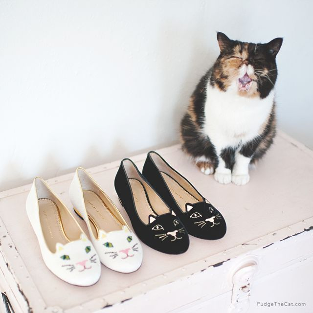 Pudge the Cat & Charlotte Olympia Shoes