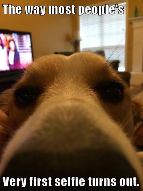 animals dogs whoops selfie golden retriever