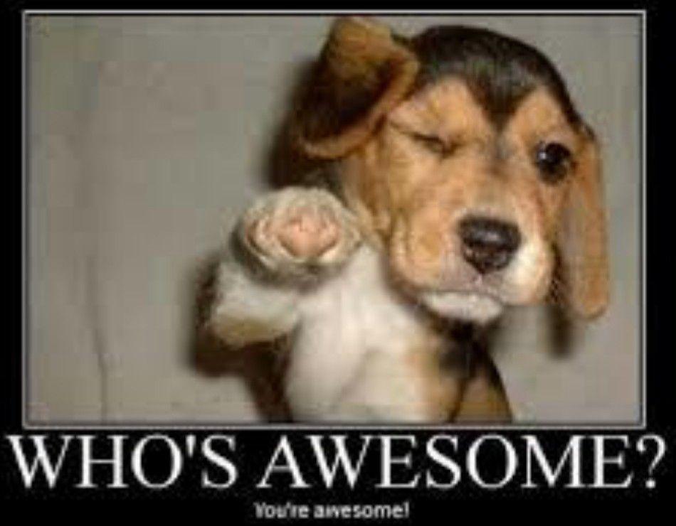 Dog Funny Animal Funny Animals Motivational Memes Inspirational Quotes