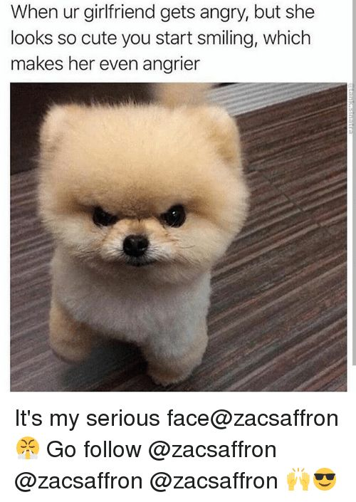 Image result for girlfriend mad pomeranian meme Cute Funny Animals Funny Dogs Funny Animal