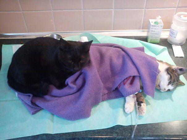 veterinary nurse cat hugs shelter animals radamenes bydgoszcz