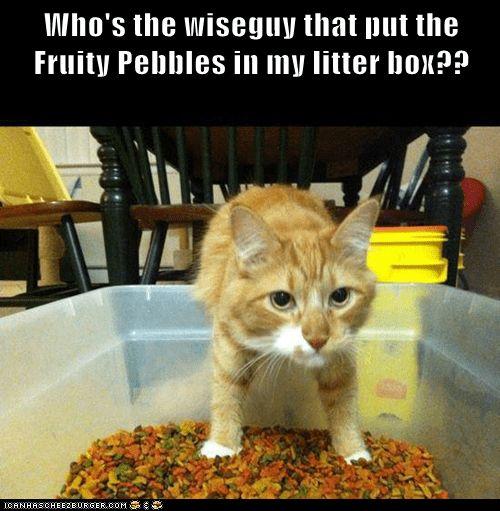 Fruity Pebbles pee litter box funny