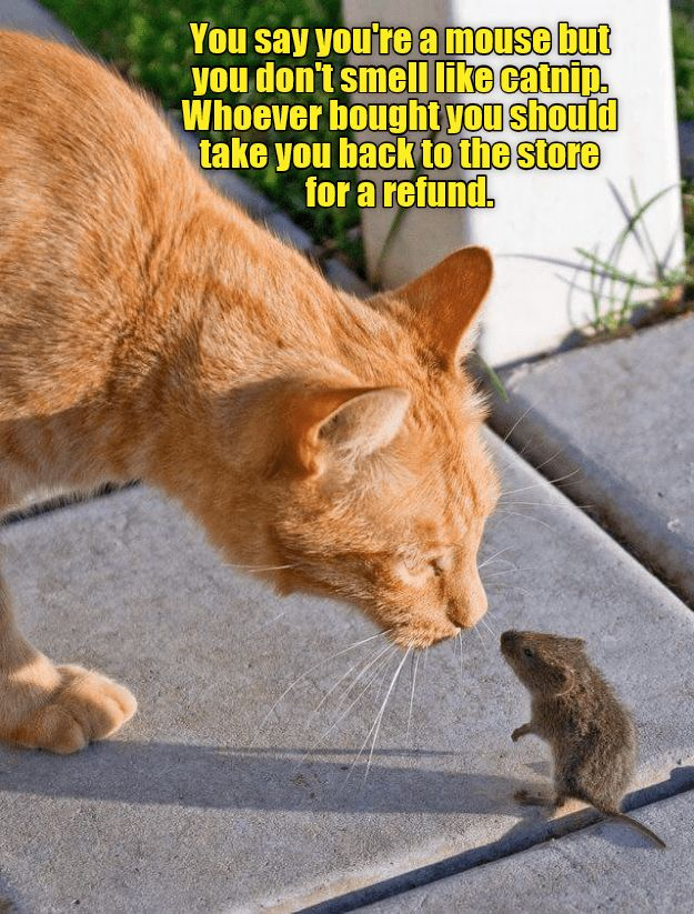 Cute cat meme of a cat that is face to face with a mouse and
