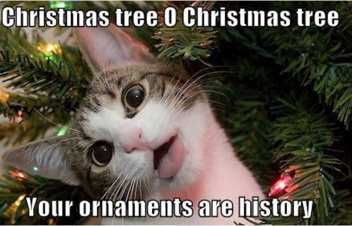 Funny Animal Cat Christmas Tree Meme Image
