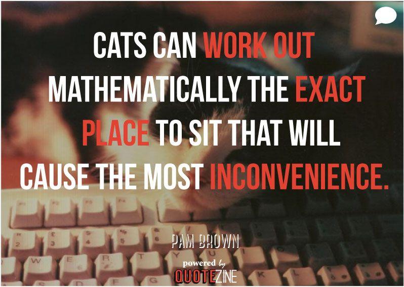 """alt=""""cat quote pam brown"""""""