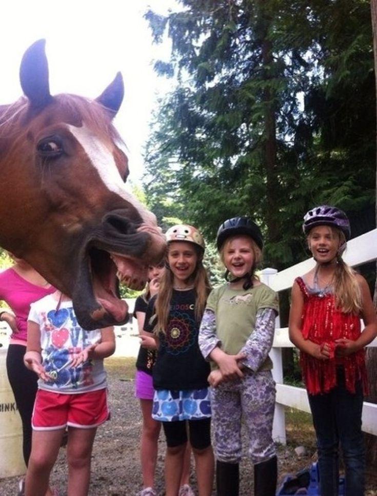 horse photo 57c5c0e05f9b5855e5d01f28