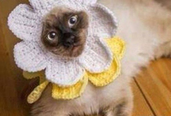Top 10 Funny of Cat Flowers