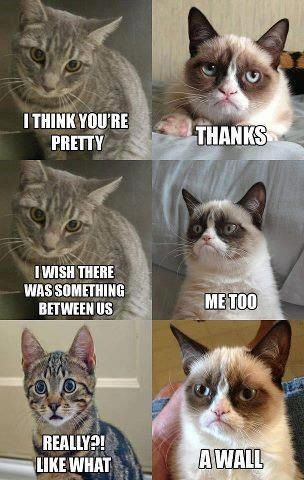 Grumpy cat thanks for the advice on what to say next time an ex tries talking to me