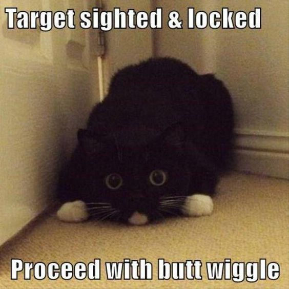 7 funny cat pictures with captions