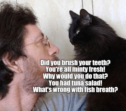 brush cat fresh tuna minty teeth caption salad