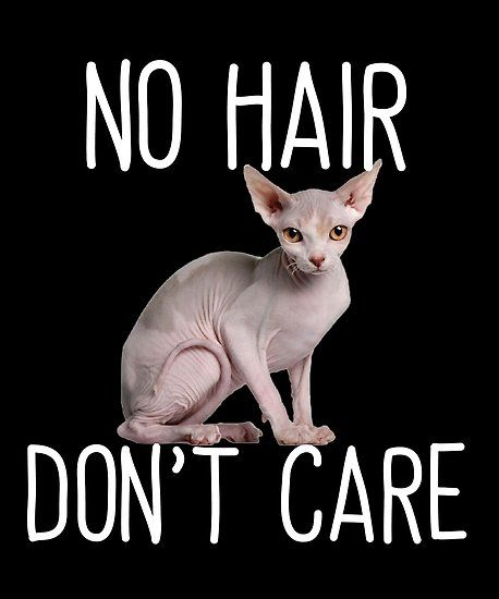 Sphynx Cat Funny Design No Hair Dont Care