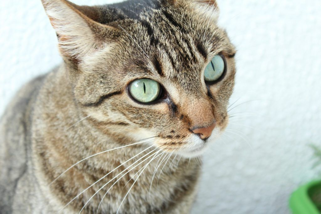 side effects of tramadol for cats canna pet