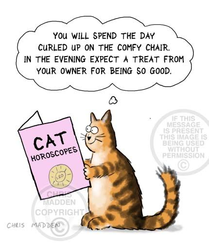 Cat cartoon Cat horoscopes