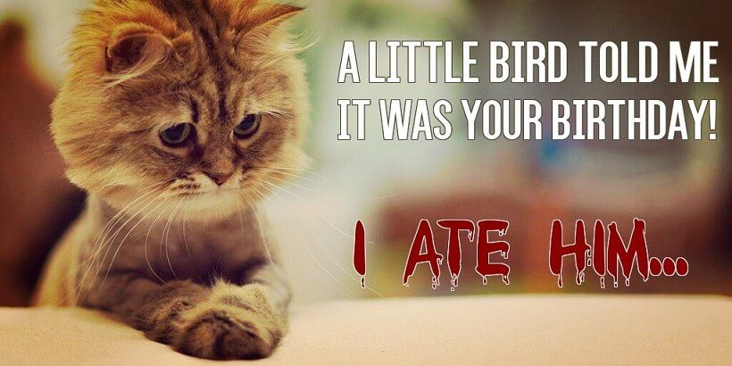 Bday meme with a wish of funny little kitten