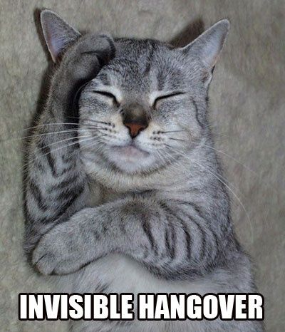 about funny cat on pinterest funny cat 400x466 Invisible cat meme
