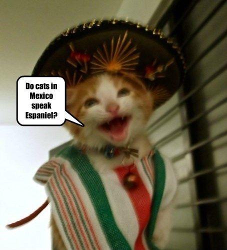 espaniel mexico speak caption Cats