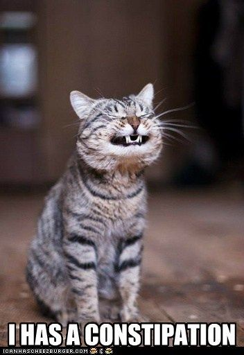 cat Cats constipated constipation cat ouch ow pain painful poop teeth