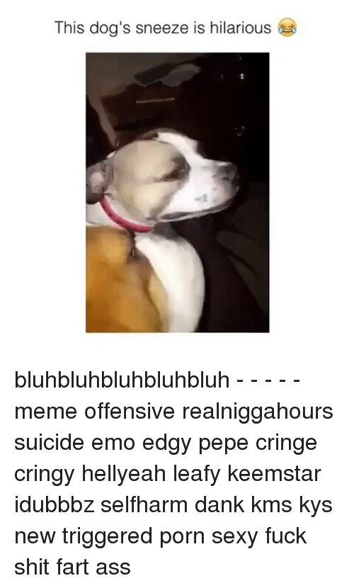 Dogs Emo and Memes This dog s sneeze is hilarious bluhbluhbluhbluhbluh