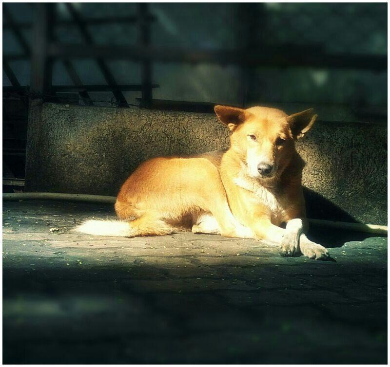 Cute Dogs New Dog Cutie 10h Cute 0d Cuteornot Good Morning Via Hd Wallpaper Cute