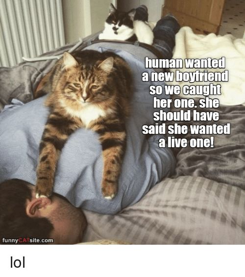Dank Boyfriend and 🤖 funny CATS site human Wanted a new