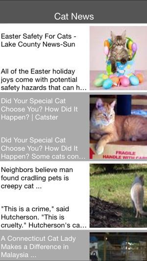 Cat News 4