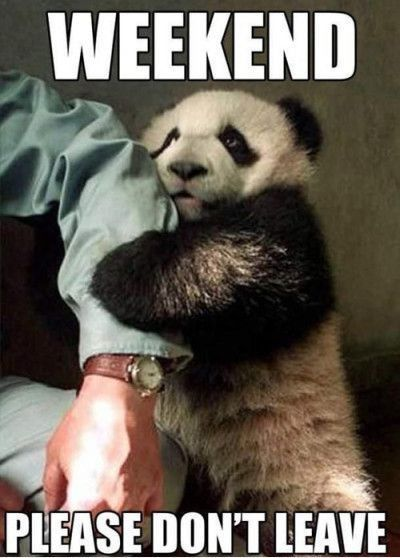 Weekend Please Dont Leave Me Funny Quotes Cute Memes Animals Quotecute Memes