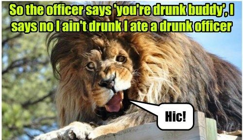 Funny big cat meme of a lion that looks drunk saying he simply at a drunk