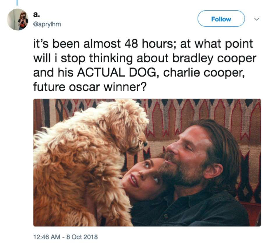 Hollywood actor Bradley Cooper s dog Charlie is winning over moviegoers in the new film