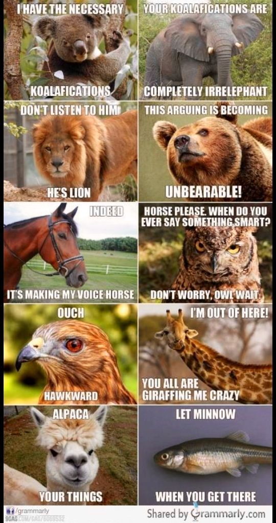 Animal Pun play with words Fun hilarious Needs to be read in order Koala fications = qualifications Irr elephant = irrelevant Lion = lying