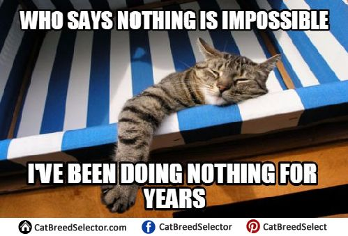 Grasp the Inspirational Funny Cat Lazy Memes
