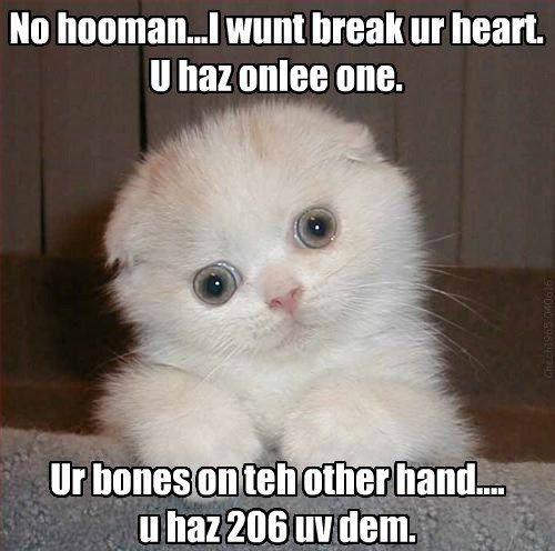 bones creepy caption break Cats